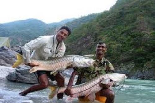 Fishing In Palampur
