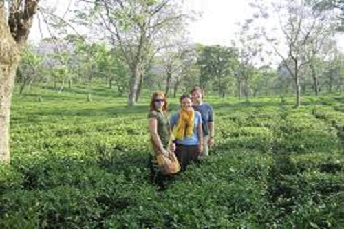 Palampur Tea Gardens