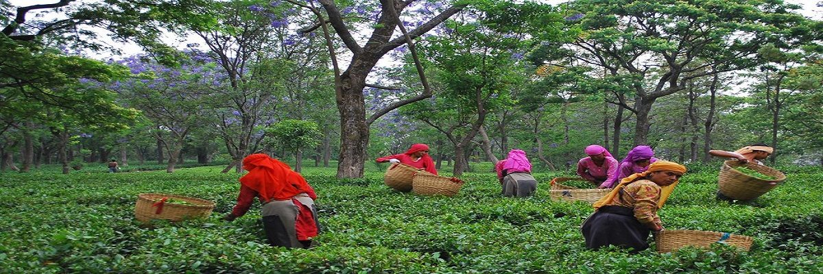 Palampur Tour Package